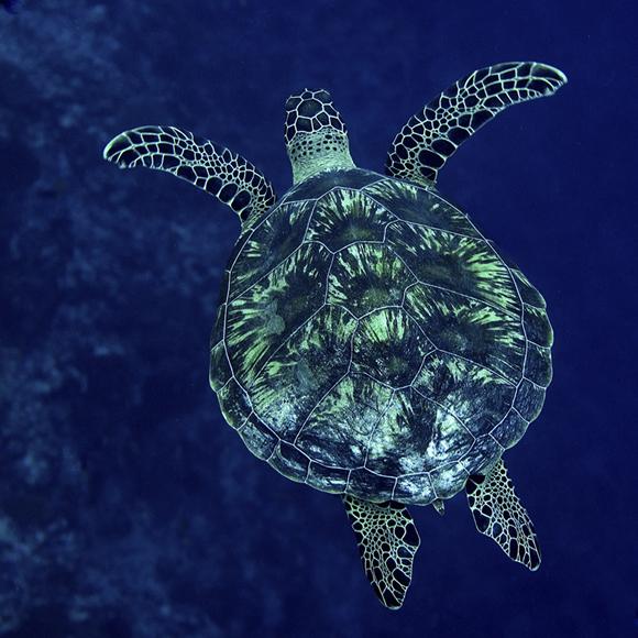 turtle_web